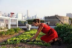 Annie Novak at Eagle Street Rooftop Farm in Greenpoint New York. Photographed by Tom Selby