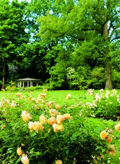 """""""Gärten des Jahres"""""""