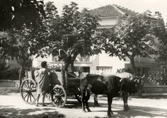 ΑΘΗΝΑ ΧΑΛΑΝΔΡΙ 1959 Once Upon A Time, Old Photos, Greece, Snow, Outdoor, Old Pictures, Greece Country, Outdoors, Vintage Photos