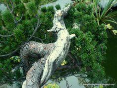 """Yamadori Area: Pinus mugo """"Broken One"""" and """"Cascade"""" Pine Forest, Garden Sculpture, Fantasy, Outdoor Decor, Fantasy Books, Fantasia"""