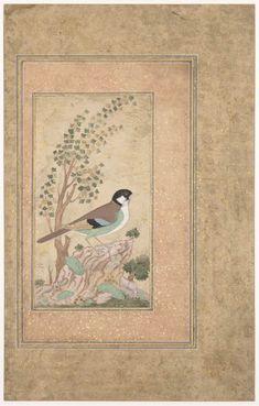 Oiseau sur un rocher, de Shafi 'Abbasi (1635 - 1674) Département des Arts de l'Islam,@ Musée du Louvre, dist. RMN/ Raphael Chipault