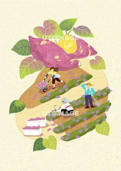 수확 011 SPAI380, 유토이미지, 일러스트, 생활, 수확, 농산물, 농수산물, 농사, 농업, 신선한, 직업, 농부, 농장, 자연, 오브젝트, 배경, 사람, 남자, 여자, 어른, 성인, 3인, 서있는, 운반하는, 땀닦는, 일하는, 수레, 호미, 삽, 농기구, 상자, 고구마, 고구마밭, 밭, 흙, 야채, 채소, 작물, 농작물, 잎, 잎사귀, 식물, 재배, 행복, 미소, 협동, 협업, 동료, 가을, 계절, 단면, 음식 Korean Illustration, Graphic Design Illustration, Illustration Art, Book Design, Illustrations Posters, Illustrators, Sketches, Drawings, Artwork