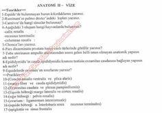 Anatomi -2 Vize Soruları