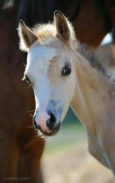 Peek-a-boo! Little foal looking cute!