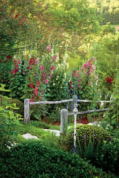 Hollyhock Show - 21 Gardens That Have Us Itching for Spring - Southernliving. These spectacular perennials regularly reach 8 feet— and taller!