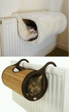 Amazing. Idea for your cat