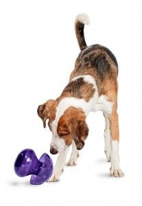 Get #fit with your #pet this year!