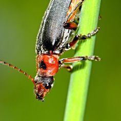 macro, animal, nature, bug