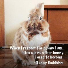 https://www.facebook.com/BunnyBuddhism/photos/np.1430930894972766.100009044171958/442430542587327/?type=1