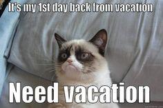 Grumpy kitty, funny grumpy cat memes, grumpy cat sayings, hilarious Grumpy Cat Quotes, Funny Grumpy Cat Memes, Funny Kid Memes, Super Funny Quotes, Videos Funny, Hilarious, Grumpy Kitty, Funny Kittens, Funny Humor