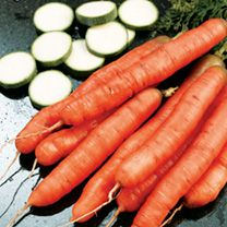 Carrot Seeds - Amsterdam Forcing 3 at Suttons Seeds Carrot Varieties, Sutton Seeds, Carrot Seeds, Organic Seeds, All Vegetables, Baby Carrots, Edible Flowers, Beetroot, Vegetable Garden