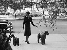 poodles in the popular 50s/60s cut