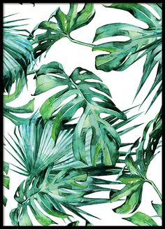 Schönes Poster mit Kaktus....