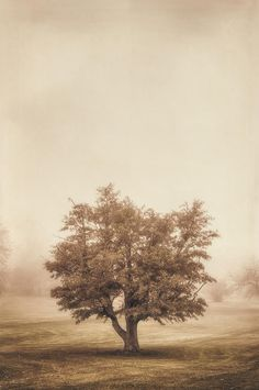 Tree Photograph - A Tree In The Fog by Scott Norris