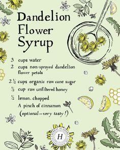 Sweeten Your Breakfast With Dandelion Flower Syrup - Health For Perfect Life Health Benefits, Health Tips, Lemon Benefits, Health Trends, Dandelion Recipes, Unfiltered Honey, Kitchen Witchery, Def Not, Dandelion Flower