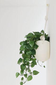 Spora — Light + Ladder Flat-back hanging planter - New Deko Sites Ivy Plants, Fake Plants, Cactus Plants, House Plants Decor, Plant Decor, Planting Succulents, Planting Flowers, Succulents Garden, Decoration Plante