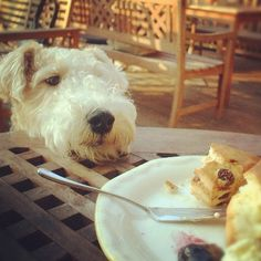 I mustn't steal this food. No really,I mustn't steal this food........ That was delicious