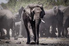 Etosha Park Namibia Elephant, Africa, Park, Animals, Adventure Trips, Travel, Animales, Animaux, Elephants