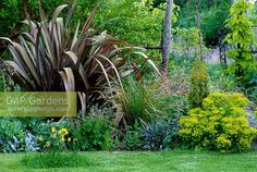 Image result for phormium with euphorbia