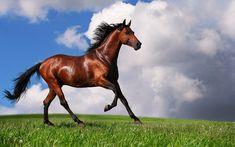 Il #cavallo #arabo è la massima espressione dello stile equino. #terradicuma #cura il tuo purosangue