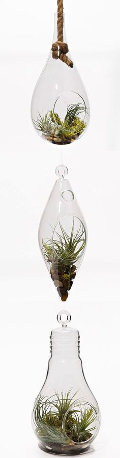 I want to add these in our hearth room, in front of windows. Air Plant Terrariums: add life to any room