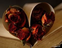 dried roses in a heart Drying Roses, Photo Heart, Paper Hearts, Be My Valentine, Red Roses, Art Quotes, Queen, Bed, Books