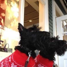 The Radley Scottie Dogs