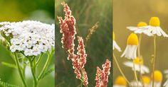 Naturen är full av smarriga växter som passar bra på tallriken. Här listar vi sju ätbara sorter, var de finns och hur du känner igen dem.