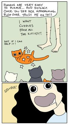 cat versus human   how my cats see me