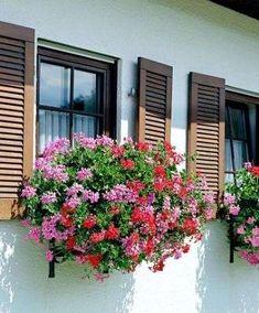 Flores colgantes para balcón: fotos plantas - Geranios para balcón