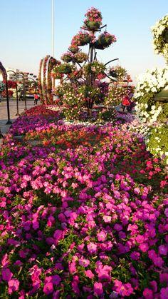Organic Gardening Tips Big Garden, Garden Soil, Vegetable Garden, Garden Art, Garden Plants, Garden Landscaping, Flowers For You, Colorful Flowers, Dubai Tourist Spots