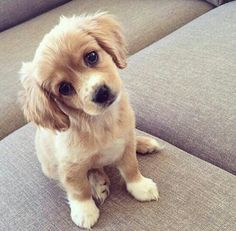 Puppy Stare Dogs pet animal cute animals pet funny animals being adventurous - Baby Animals 2019 Cute Dogs And Puppies, I Love Dogs, Pet Dogs, Dog Cat, Adorable Puppies, Doggies, Cutest Puppy, Funny Puppies, Funny Dogs