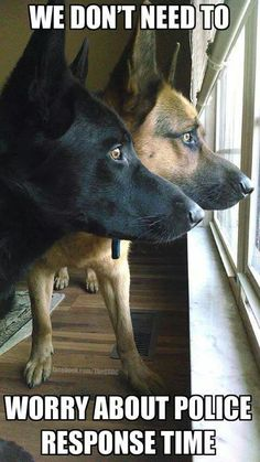 Wicked Training Your German Shepherd Dog Ideas. Mind Blowing Training Your German Shepherd Dog Ideas. Funny Dogs, Funny Animals, Cute Animals, I Love Dogs, Cute Dogs, Humor Animal, Game Mode, Police Dogs, German Shepherd Puppies
