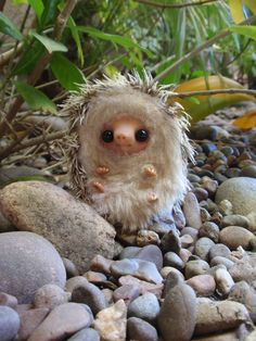 This can't be real!?!? Is this a hedgehog toy...the face looks too perfect to be real!