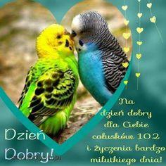 Parrot, Bird, Animals, Polish, Parrot Bird, Animales, Animaux, Birds, Animal