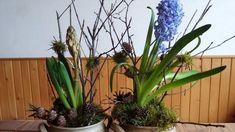Jana Melas Pullmannová: Decoration with hyacinth Gardening, Decoration, Youtube, Plants, Painting, Beautiful, Instagram, Decorating, Garten