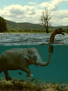 elefante ou monstro do lago ness haha