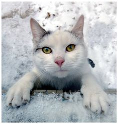Hug me, please. by *jankolas Cat Vs Cat, Dog Cat, Pretty Cats, Cute Cats, Winter Cat, Winter Time, Curious Cat, Man And Dog, Outdoor Cats