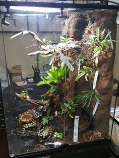 Exotic Animals, Exotic Pets, Reptile Tanks, Tropical Terrariums, Snake Enclosure, Terrarium Ideas, Dart Frogs, Geckos, Vivarium