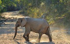 Rhino Post Safari Lodge | Specials 4 Africa