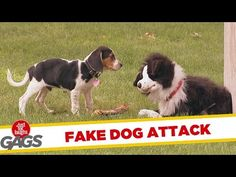 This Dog *Thought* He Was Approaching Another Dog, But Look Closer.. It's HYSTERICAL! | PetFlow Blog - The most interesting news for pet parents around the world.