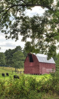 Red Barn, Pasture & Cows