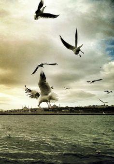 Istanbul Kanatlarımın Altında