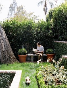 Hollywood Hills Garden | Mark D. Sikes: Interiors