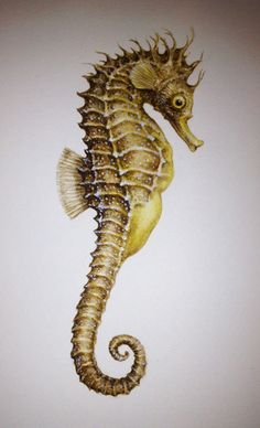 Seahorse Hippocampus guttulatus watercolour by diannesutherlandart