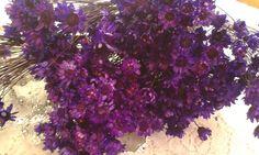 Flor Sempre Viva Lilás Flor seca