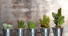Cactus y plantas crasas Cactus Planta, Cactus Y Suculentas, Bonsai, Tiny Cactus, Cacti And Succulents, Planting Flowers, Vines, Planter Pots, House Styles
