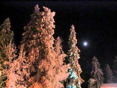 Marjorie & Jari Sillanpää - Jouluyön Rauha Christmas Tree, Holiday Decor, Outdoor, Music, Teal Christmas Tree, Outdoors, Musica, Musik, Xmas Trees