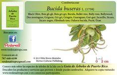 Redescubre el Úcar... con la Guía de Árboles de Puerto Rico www.verdenativopr.com