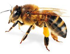 Foul Brood Quiz | NY Bee Wellness Workshops